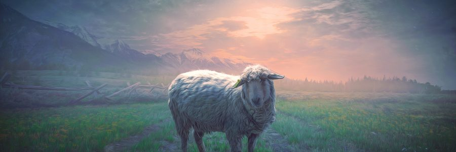 Matthew 21:6-11 – The lamb…